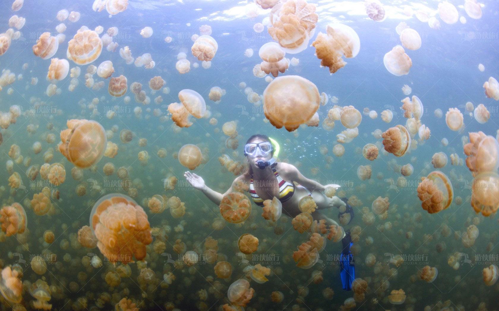 帕劳水母湖